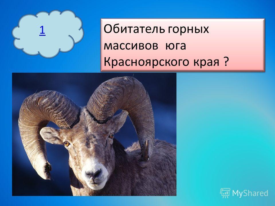 1 Обитатель горных массивов юга Красноярского края ?