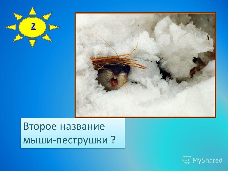 Второе название мыши-пеструшки ? Второе название мыши-пеструшки ? 2