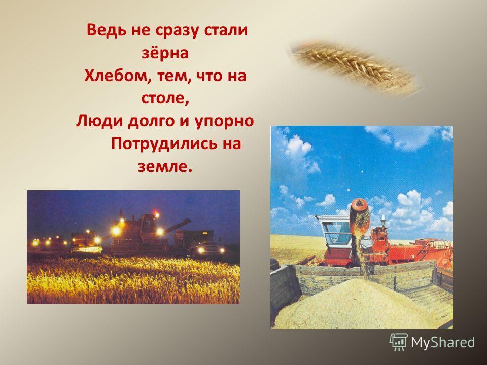 Ведь не сразу стали зёрна Хлебом, тем, что на столе, Люди долго и упорно Потрудились на земле.
