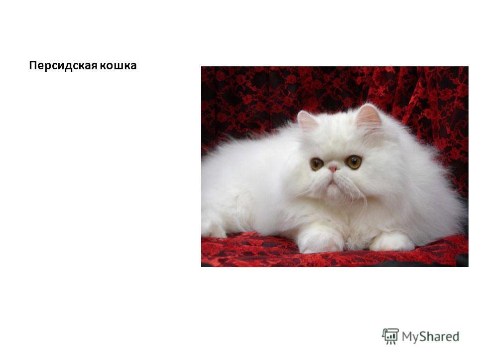 Кошки Подготовила работу ученица 4 класса Б Бибаева Венера
