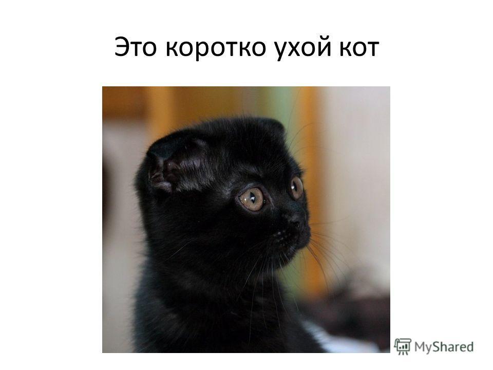 Египтяне брили брови, как признак траура, когда теряли любимую кошку.