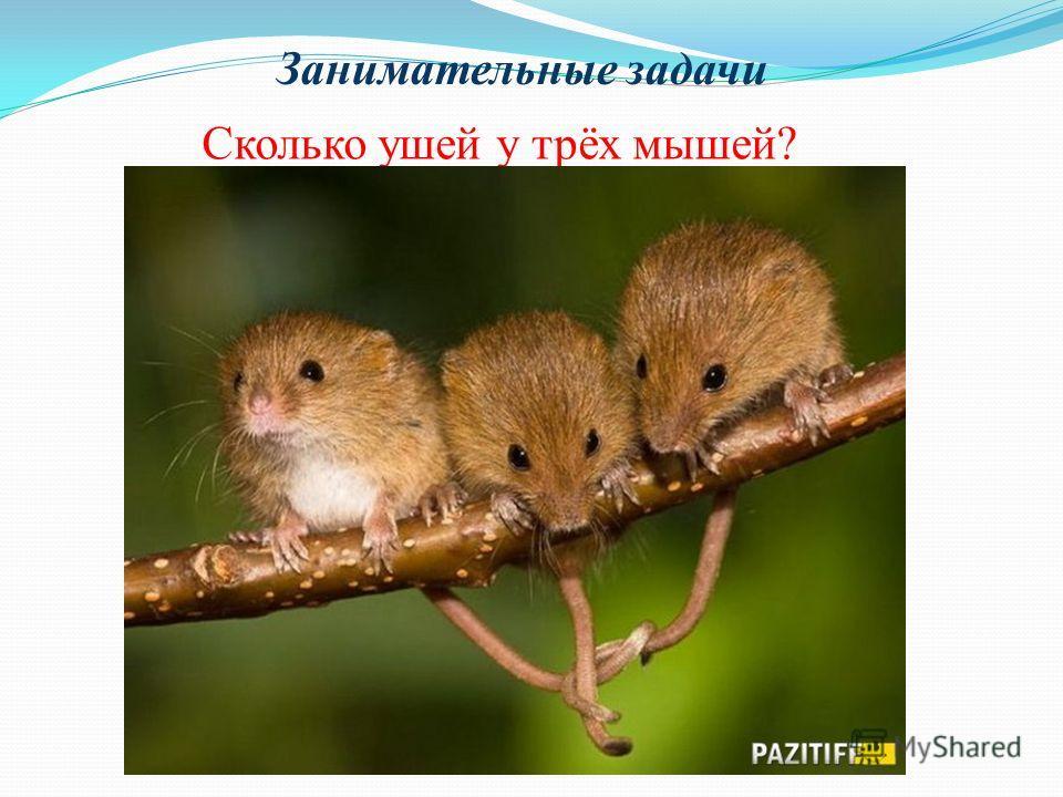 Занимательные задачи Сколько ушей у трёх мышей?