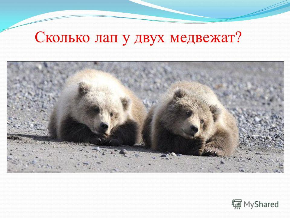 Сколько лап у двух медвежат?