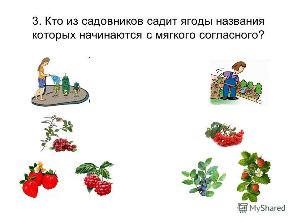 3. Кто из садовников садит ягоды названия которых начинаются с мягкого согласного?