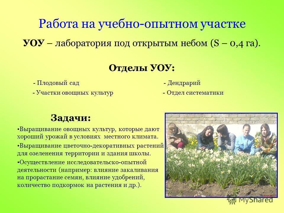 Акции: - «Помогите птицам» (изготовление скворечников) - «Зеленый наряд поселку» - «Нет табачному дыму» и др.«Нет табачному дыму» Массовые мероприятия: - «Витамины к школьному столу» - «Праздник урожая» - «Красота уходящего лета» (конкурс букетов) -