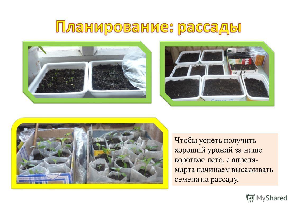 Чтобы успеть получить хороший урожай за наше короткое лето, с апреля- марта начинаем высаживать семена на рассаду.