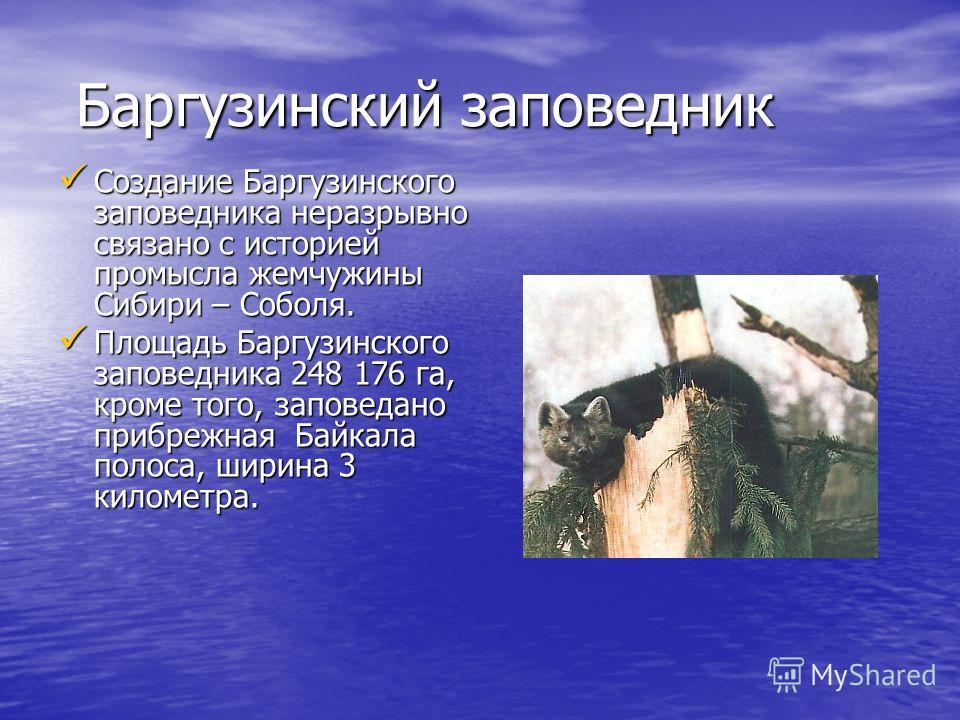 Баргузинский заповедник Создание Баргузинского заповедника неразрывно связано с историей промысла жемчужины Сибири – Соболя. Площадь Баргузинского заповедника 248 176 га, кроме того, заповедано прибрежная Байкала полоса, ширина 3 километра.