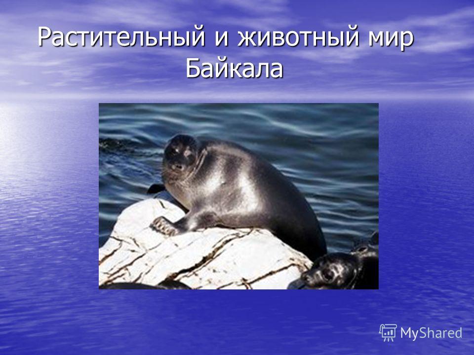 Растительный и животный мир Байкала
