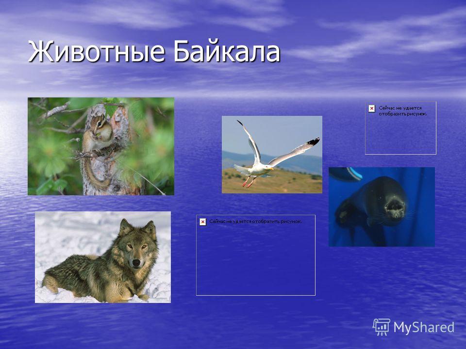 Животные Байкала