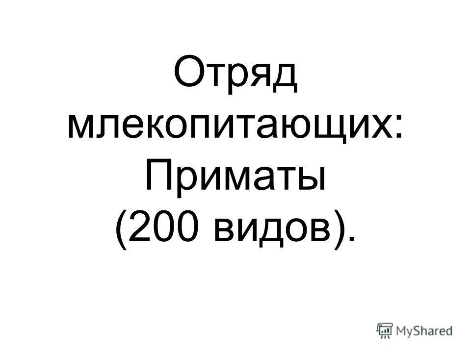 Отряд млекопитающих: Приматы (200 видов).