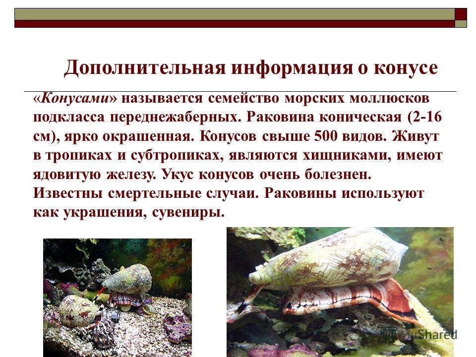 Дополнительная информация о конусе «Конусами» называется семейство морских моллюсков подкласса переднежаберных. Раковина коническая (2-16 см), ярко окрашенная. Конусов свыше 500 видов. Живут в тропиках и субтропиках, являются хищниками, имеют ядовиту