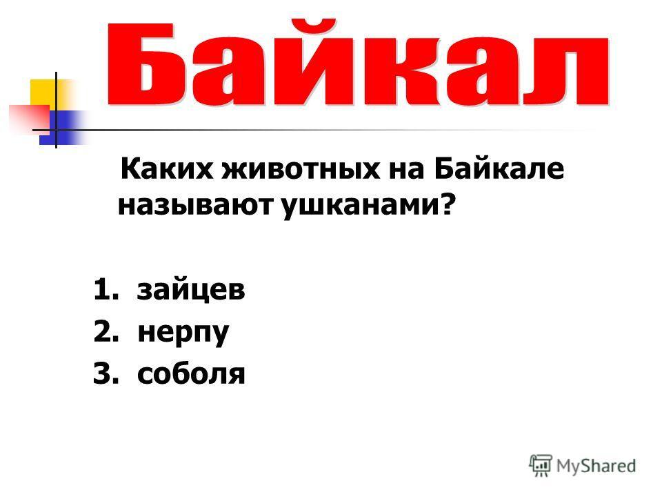Каких животных на Байкале называют ушканами? 1. зайцев 2. нерпу 3. соболя