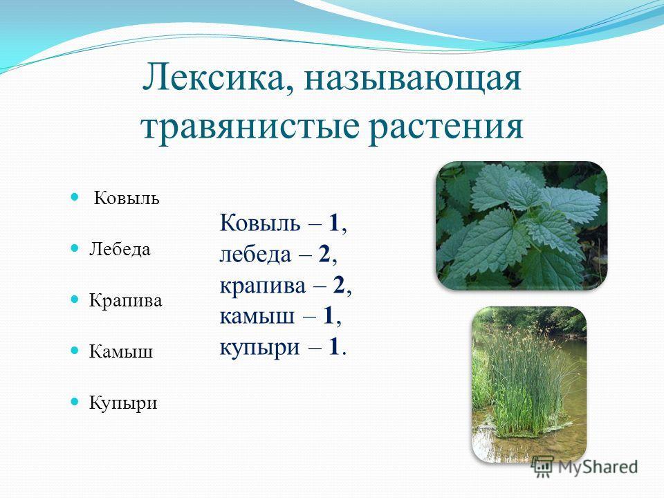 Лексика, называющая травянистые растения Ковыль Лебеда Крапива Камыш Купыри Ковыль – 1, лебеда – 2, крапива – 2, камыш – 1, купыри – 1.