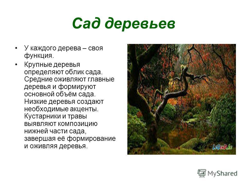 Сад деревьев У каждого дерева – своя функция. Крупные деревья определяют облик сада. Средние оживляют главные деревья и формируют основной объём сада. Низкие деревья создают необходимые акценты. Кустарники и травы выявляют композицию нижней части сад
