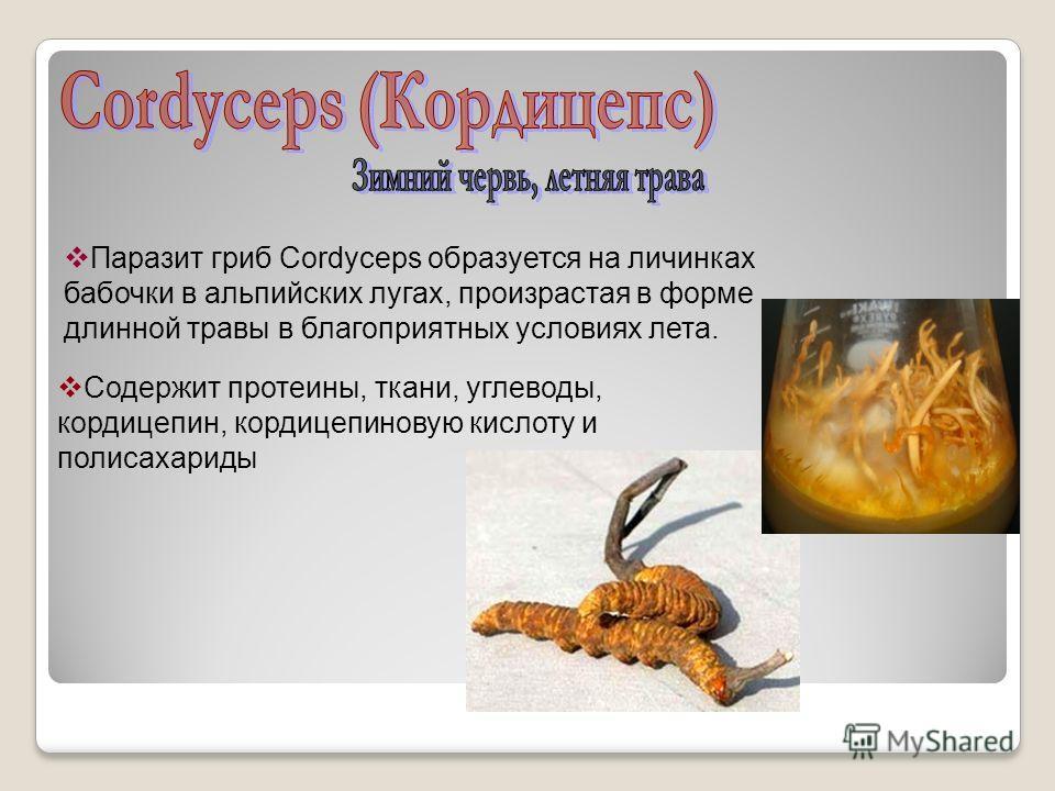 Паразит гриб Cordyceps образуется на личинках бабочки в альпийских лугах, произрастая в форме длинной травы в благоприятных условиях лета. Содержит протеины, ткани, углеводы, кордицепин, кордицепиновую кислоту и полисахариды