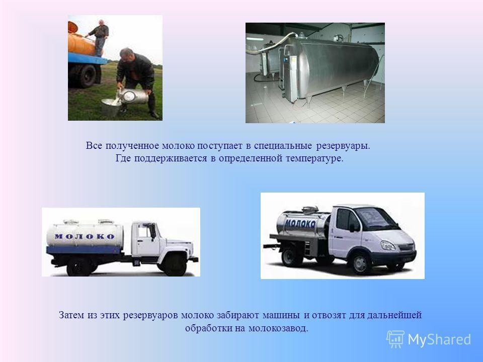 Затем из этих резервуаров молоко забирают машины и отвозят для дальнейшей обработки на молокозавод. Все полученное молоко поступает в специальные резервуары. Где поддерживается в определенной температуре.