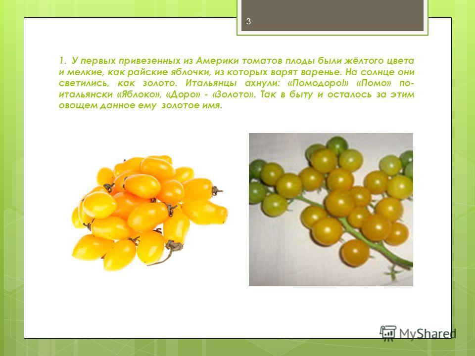 1. У первых привезенных из Америки томатов плоды были жёлтого цвета и мелкие, как райские яблочки, из которых варят варенье. На солнце они светились, как золото. Итальянцы ахнули: «Помодоро!» «Помо» по- итальянски «Яблоко», «Доро» - «Золото». Так в б