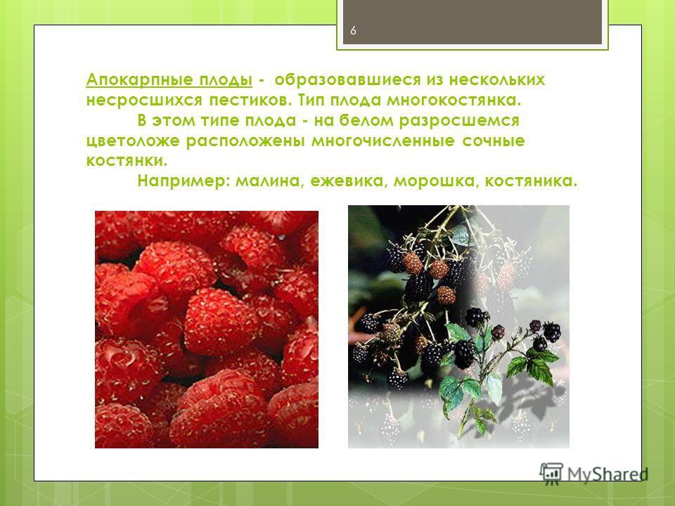 Апокарпные плоды - образовавшиеся из нескольких несросшихся пестиков. Тип плода многокостянка. В этом типе плода - на белом разросшемся цветоложе расположены многочисленные сочные костянки. Например: малина, ежевика, морошка, костяника. 6