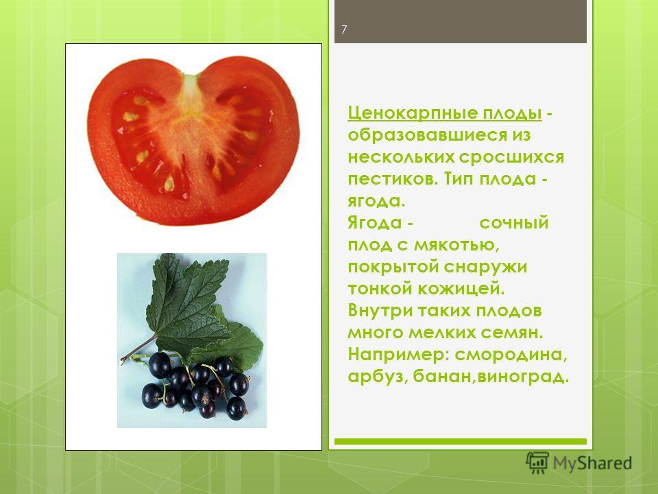 Ценокарпные плоды - образовавшиеся из нескольких сросшихся пестиков. Тип плода - ягода. Ягода -сочный плод с мякотью, покрытой снаружи тонкой кожицей. Внутри таких плодов много мелких семян. Например: смородина, арбуз, банан,виноград. 7