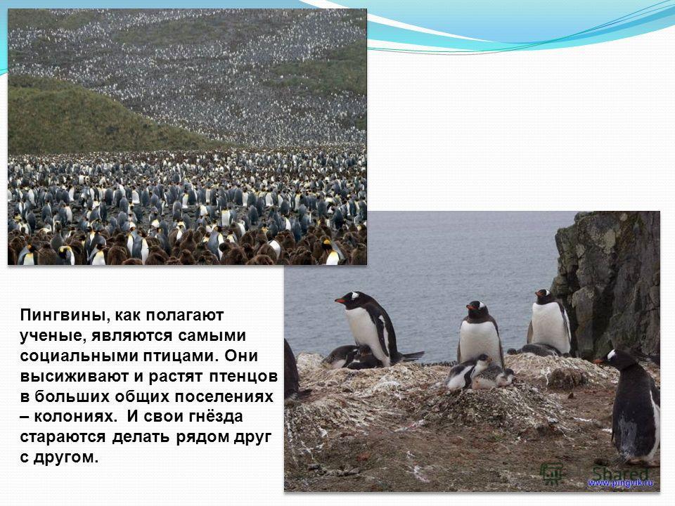 Пингвины питаются рыбой, ракообразными и мелкими головоногими. Во время линьки пингвины не могут рыбачить, поэтому вынуждены отказаться от пищи. Некоторые их виды, такие как пингвины Адели, императорские, антарктические и хохлатые пингвины, не питают