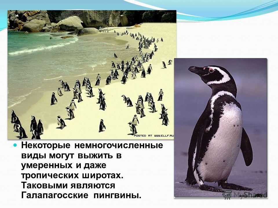 Пингвины - вид бескрылых, водоплавающих птиц, которые живут в естественной среде только в землях южного полушария. Большинство пингвинов проводит приблизительно половину своей жизни в океане, а другую половину на суше. Как правило, большинство разнов
