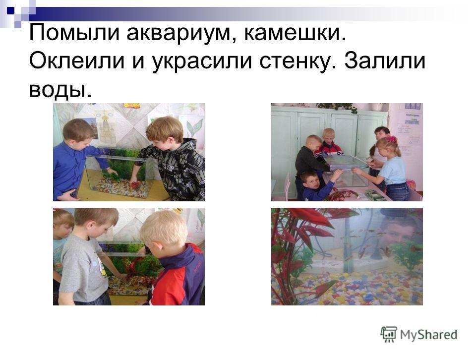 Помыли аквариум, камешки. Оклеили и украсили стенку. Залили воды.