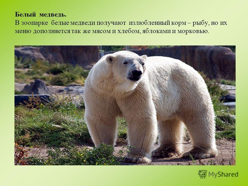 Бурый медведь. Основу питания бурых медведей составляет мясо, рыба, овощи, фрукты, хлеб.