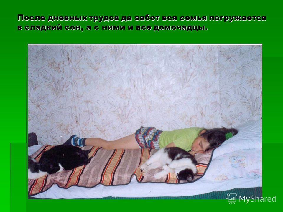 После дневных трудов да забот вся семья погружается в сладкий сон, а с ними и все домочадцы.