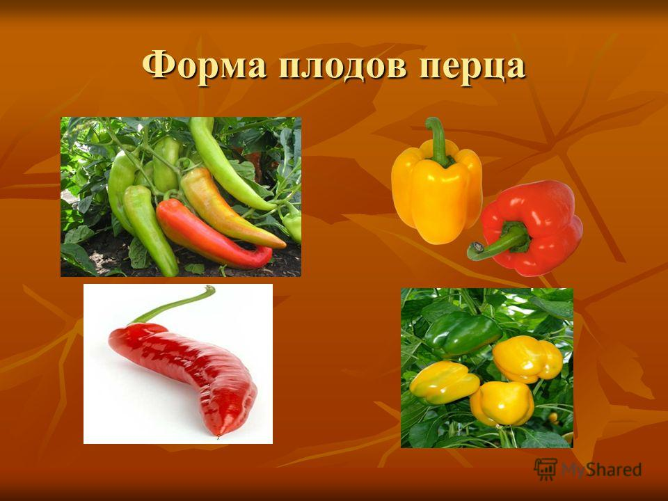 Форма плодов перца