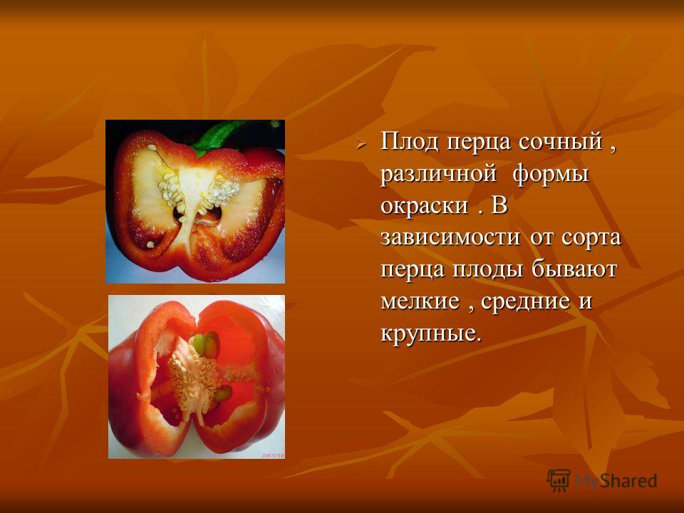 Плод перца сочный, различной формы окраски. В зависимости от сорта перца плоды бывают мелкие, средние и крупные. Плод перца сочный, различной формы окраски. В зависимости от сорта перца плоды бывают мелкие, средние и крупные.