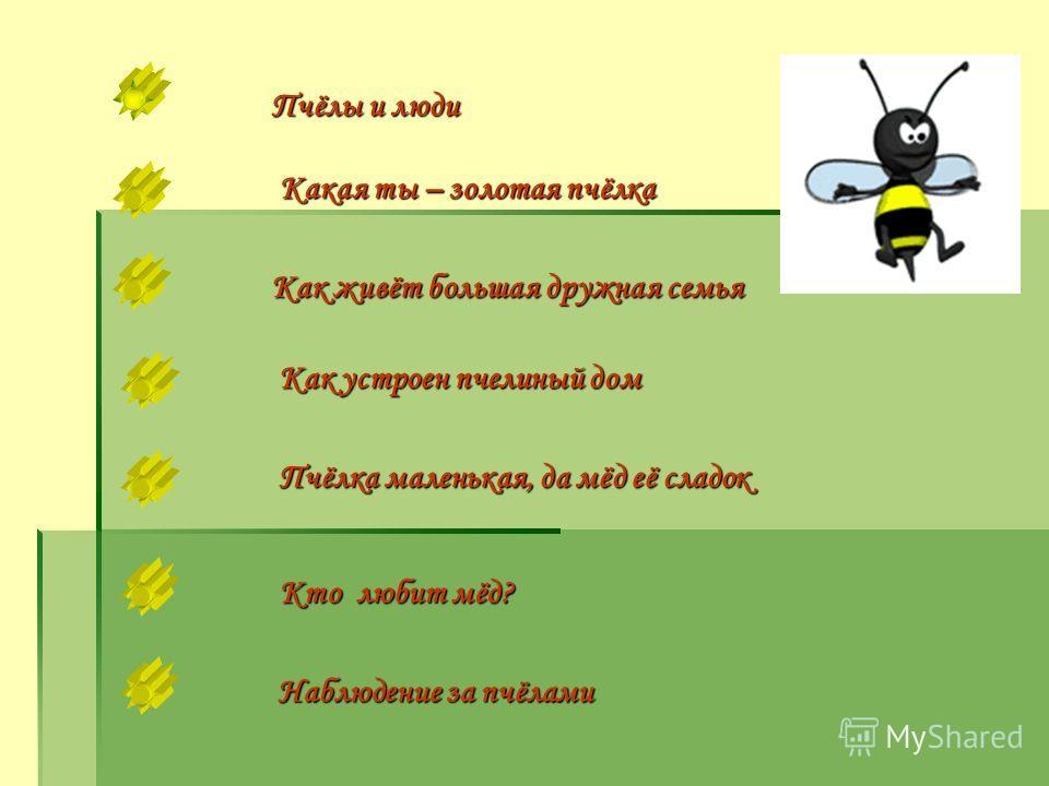 Пчёлы и люди Какая ты – золотая пчёлка Как живёт большая дружная семья Пчёлка маленькая, да мёд её сладок Пчёлка маленькая, да мёд её сладок Наблюдение за пчёлами Наблюдение за пчёлами Как устроен пчелиный дом Как устроен пчелиный дом Кто любит мёд?