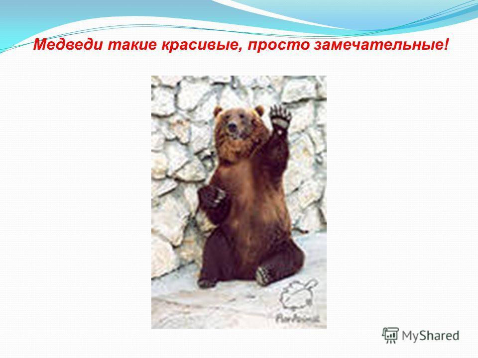 Медведи такие красивые, просто замечательные!