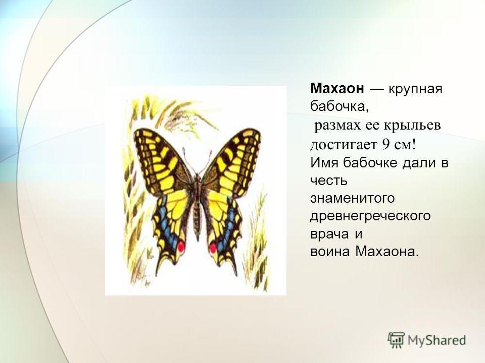 Махаон крупная бабочка, размах ее крыльев достигает 9 см! Имя бабочке дали в честь знаменитого древнегреческого врача и воина Махаона.