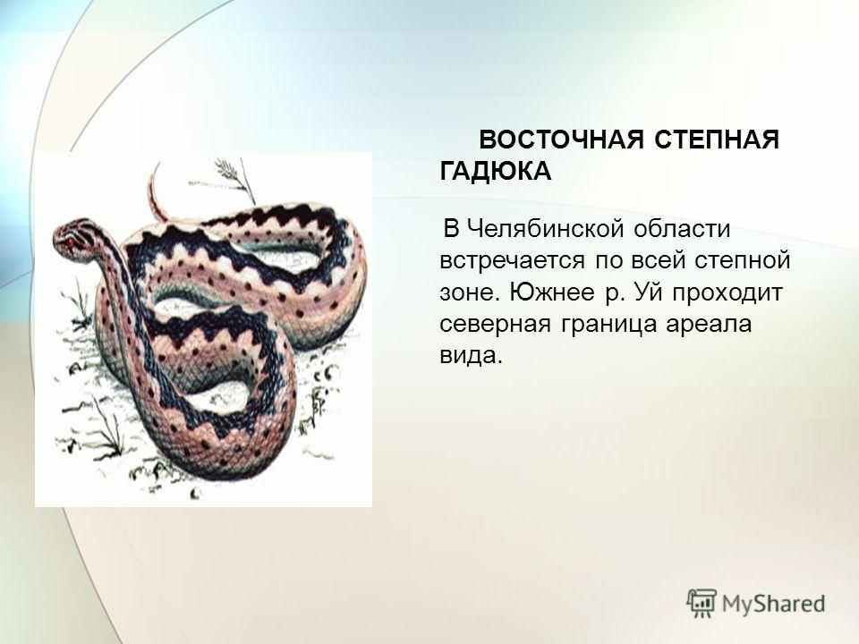 ВОСТОЧНАЯ СТЕПНАЯ ГАДЮКА В Челябинской области встречается по всей степной зоне. Южнее р. Уй проходит северная граница ареала вида.