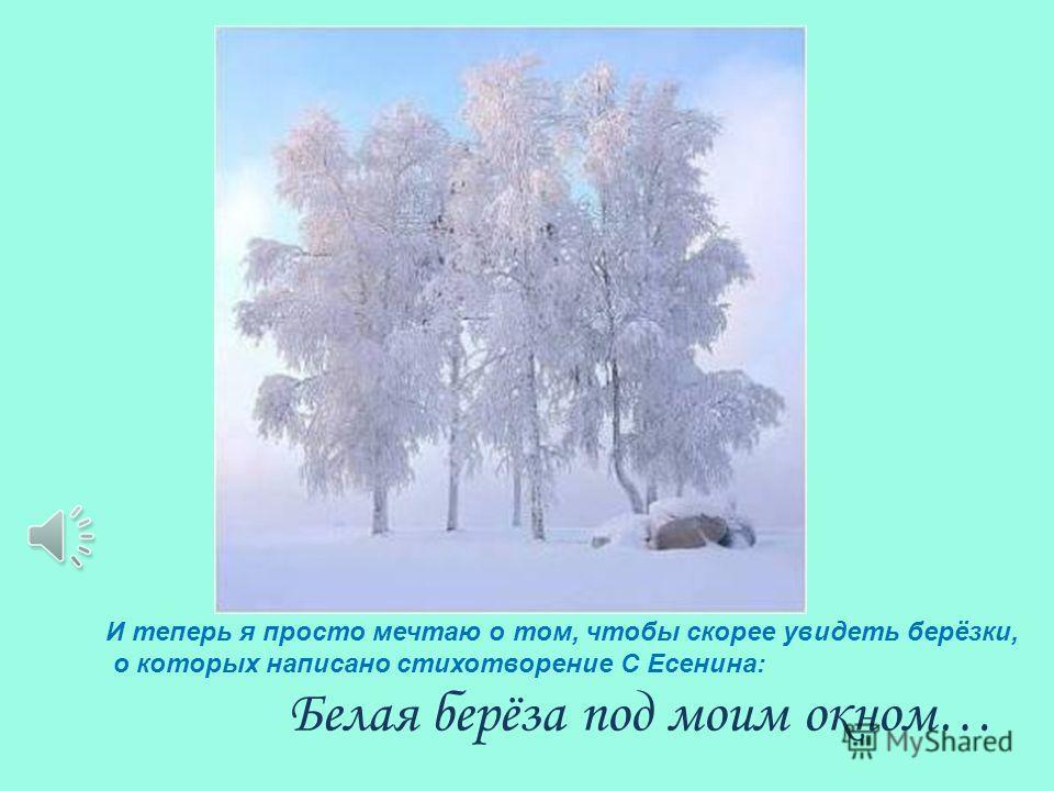 Берёзка готовится к долгой холодной зиме. ноябрь20