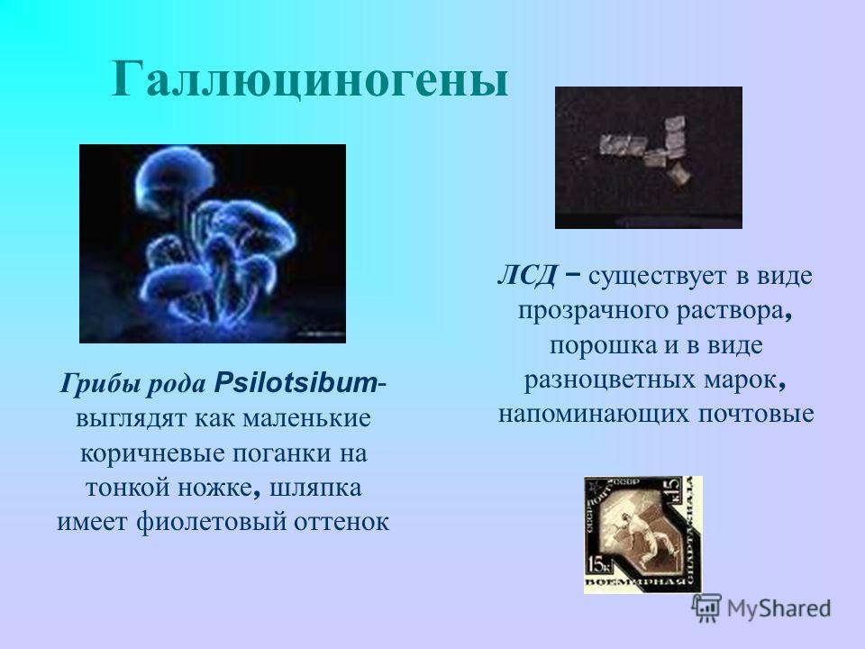 Галлюциногены Грибы рода Psilotsibum- выглядят как маленькие коричневые поганки на тонкой ножке, шляпка имеет фиолетовый оттенок ЛСД – существует в виде прозрачного раствора, порошка и в виде разноцветных марок, напоминающих почтовые