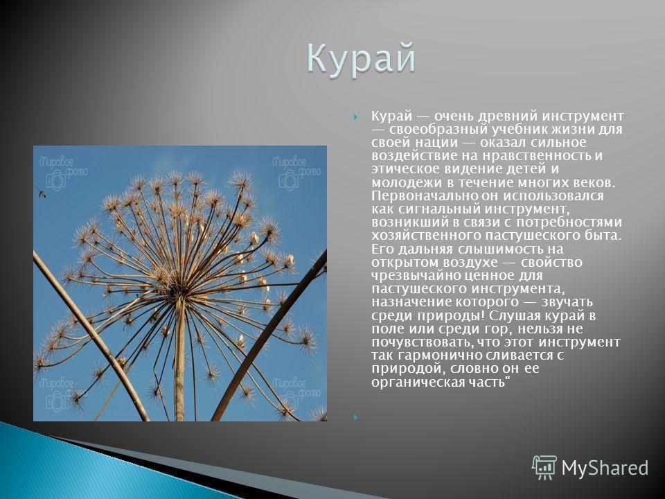 Курай очень древний инструмент своеобразный учебник жизни для своей нации оказал сильное воздействие на нравственность и этическое видение детей и молодежи в течение многих веков. Первоначально он использовался как сигнальный инструмент, возникший в