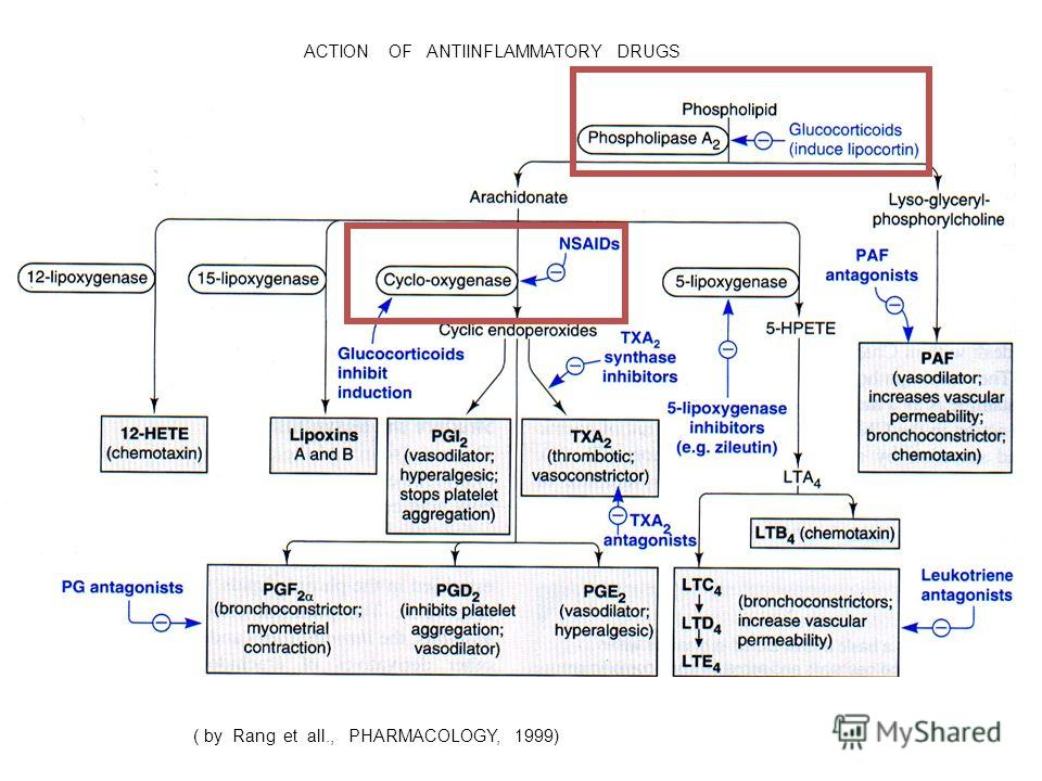 ( by Rang et all., PHARMACOLOGY, 1999) ACTION OF ANTIINFLAMMATORY DRUGS