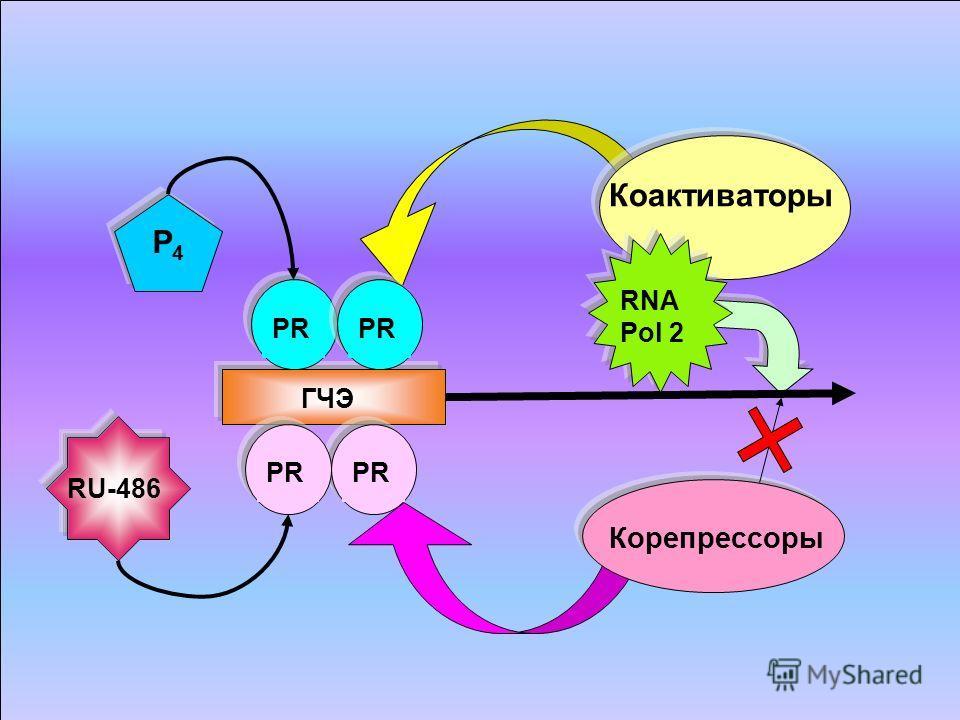 ГЧЭ PR P4P4 RU-486 Коактиваторы Корепрессоры RNA Pol 2