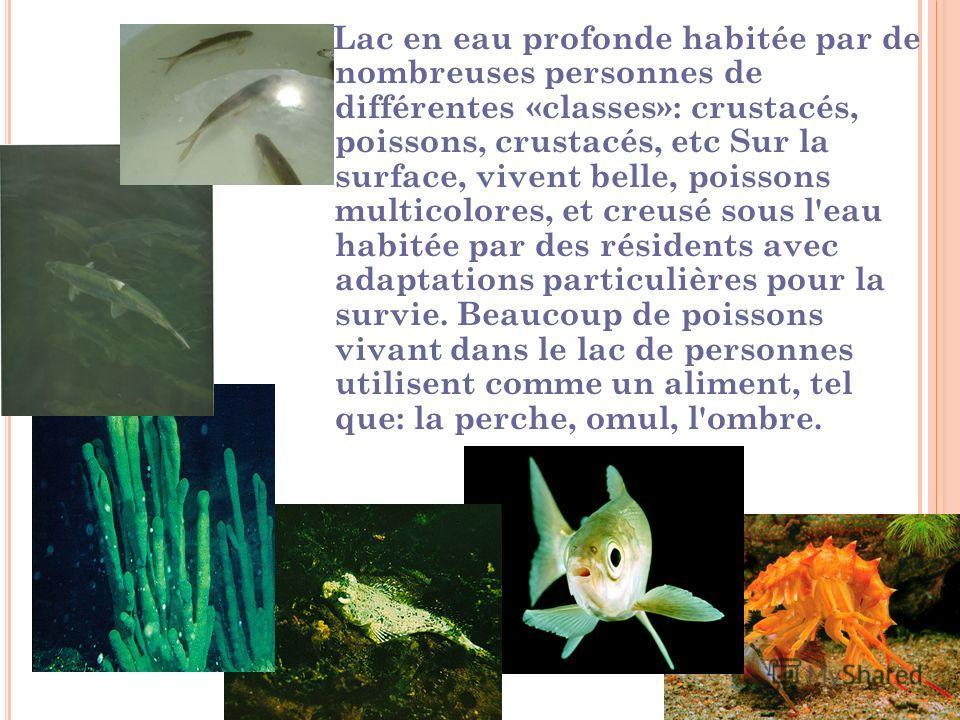 Lac en eau profonde habitée par de nombreuses personnes de différentes «classes»: crustacés, poissons, crustacés, etc Sur la surface, vivent belle, poissons multicolores, et creusé sous l'eau habitée par des résidents avec adaptations particulières p