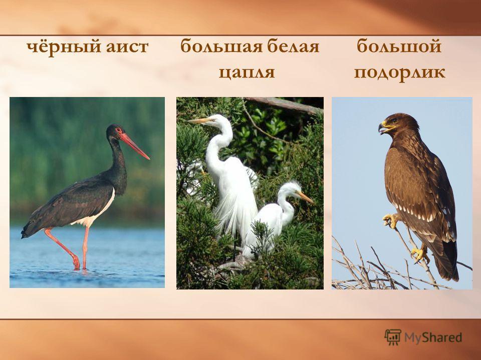 Красная книга с. Гришенское