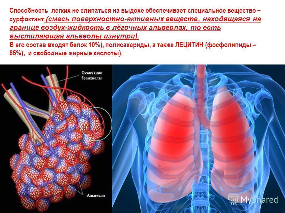Способность легких не слипаться на выдохе обеспечивает специальное вещество – сурфоктант (смесь поверхностно-активных веществ, находящаяся на границе воздух-жидкость в лёгочных альвеолах, то есть выстилающая альвеолы изнутри). В его состав входят бел
