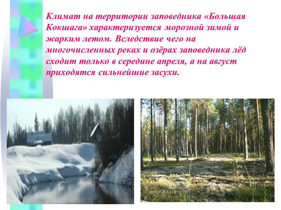 Климат на территории заповедника «Большая Кокшага» характеризуется морозной зимой и жарким летом. Вследствие чего на многочисленных реках и озёрах заповедника лёд сходит только в середине апреля, а на август приходятся сильнейшие засухи.