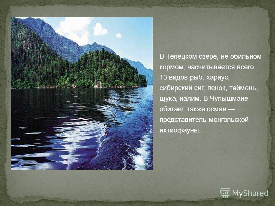 В Телецком озере, не обильном кормом, насчитывается всего 13 видов рыб: хариус, сибирский сиг, ленок, таймень, щука, налим. В Чулышмане обитает также осман представитель монгольской ихтиофауны.
