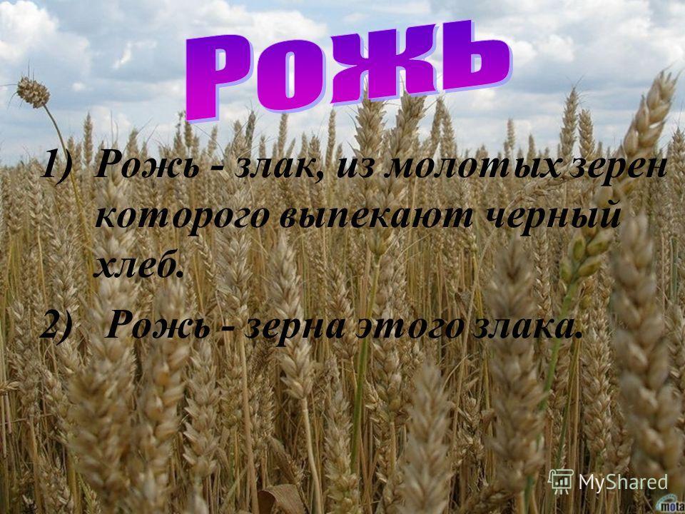 1)Рожь - злак, из молотых зерен которого выпекают черный хлеб. 2) Рожь - зерна этого злака.