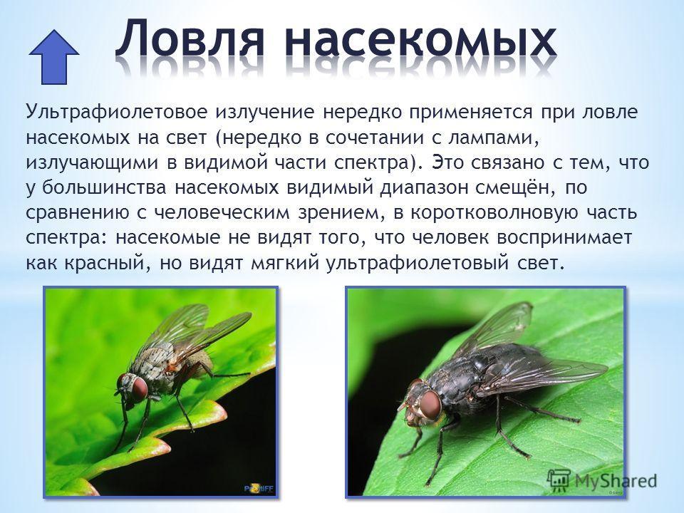 Ультрафиолетовое излучение нередко применяется при ловле насекомых на свет (нередко в сочетании с лампами, излучающими в видимой части спектра). Это связано с тем, что у большинства насекомых видимый диапазон смещён, по сравнению с человеческим зрени