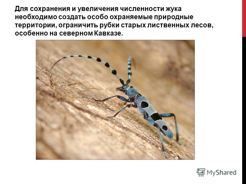 Для сохранения и увеличения численности жука необходимо создать особо охраняемые природные территории, ограничить рубки старых лиственных лесов, особенно на северном Кавказе.