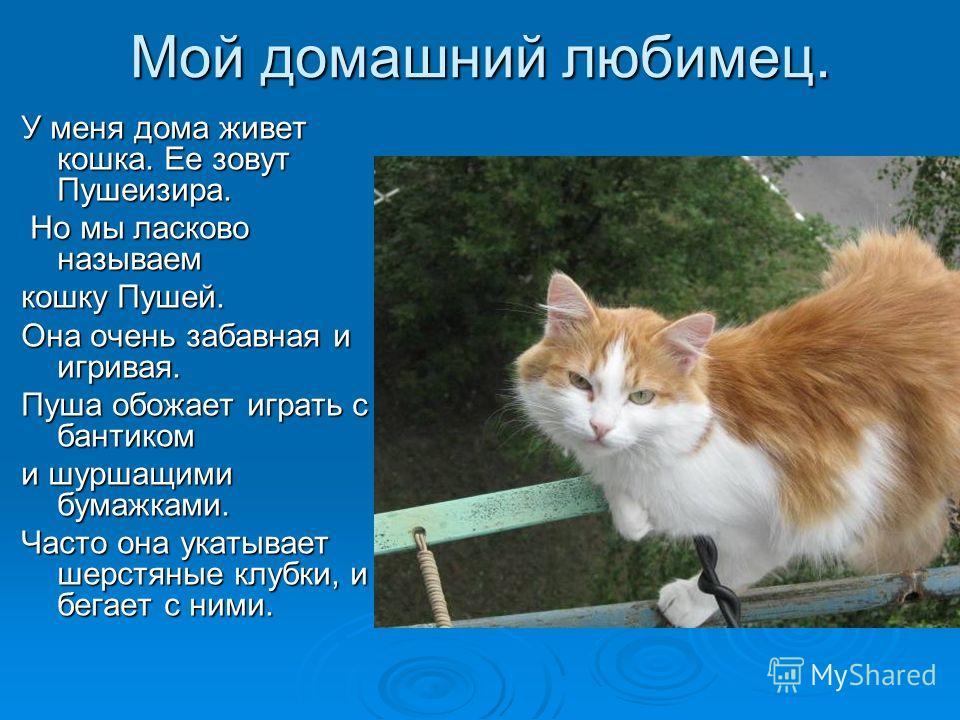 Мой домашний любимец. У меня дома живет кошка. Ее зовут Пушеизира. Но мы ласково называем Но мы ласково называем кошку Пушей. Она очень забавная и игривая. Пуша обожает играть с бантиком и шуршащими бумажками. Часто она укатывает шерстяные клубки, и