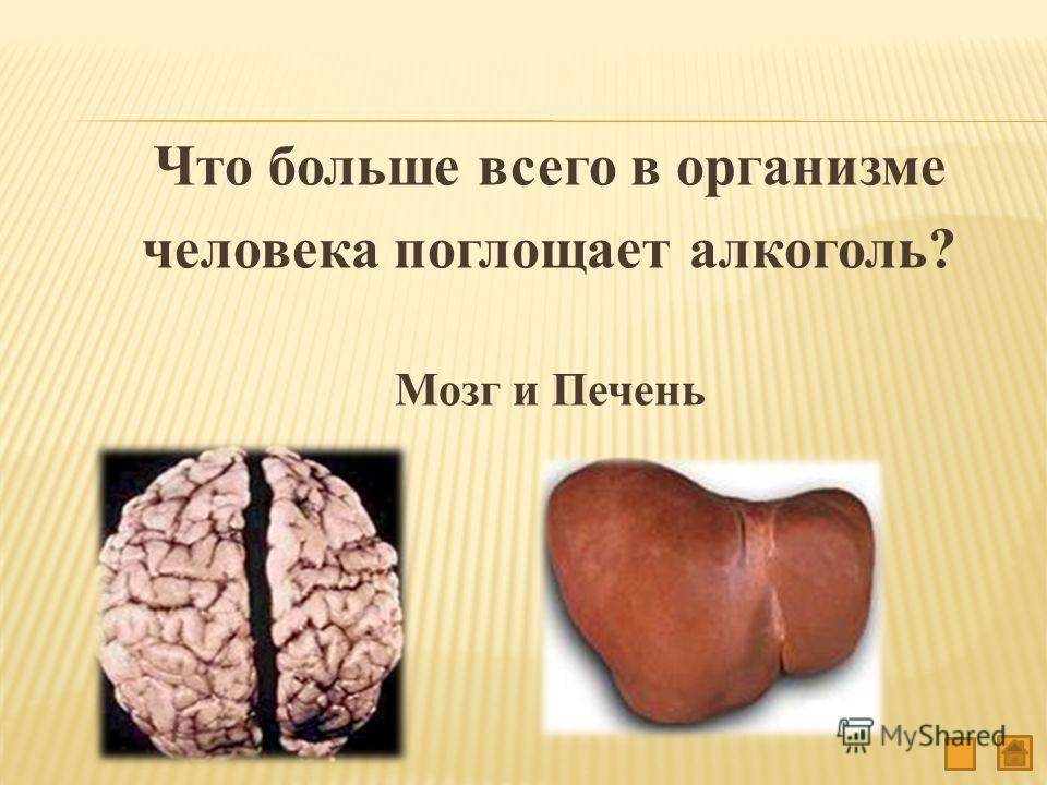 Что больше всего в организме человека поглощает алкоголь? Мозг и Печень