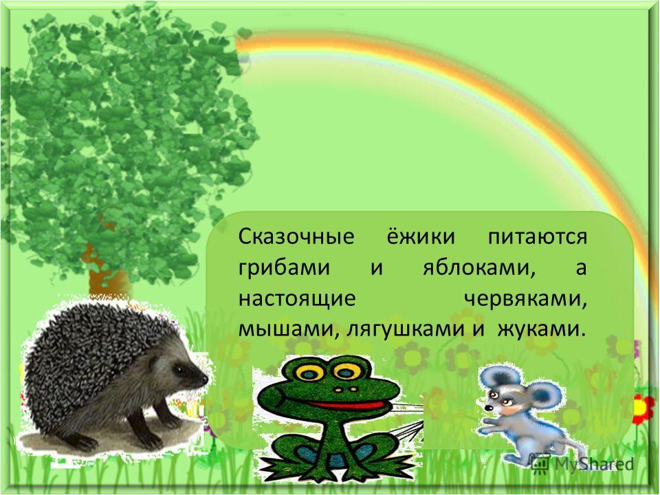 Сказочные ёжики питаются грибами и яблоками, а настоящие червяками, мышами, лягушками и жуками.